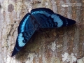 IMG_1450-butterfly-closeup