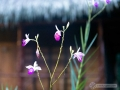 IMG_1600-orchids-1